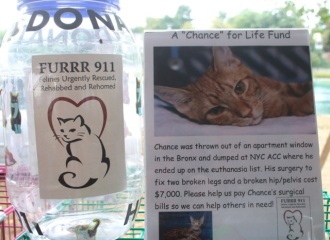 """Please take the """"chance"""" to help this little guy."""