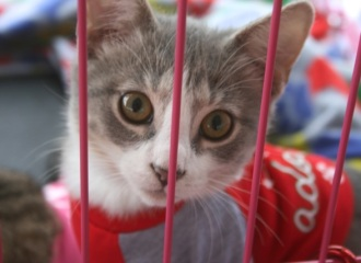 Cute Kitten, courtesy of FURRR 911. Photo by A. Bogdanovic