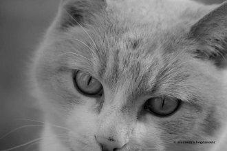 Eli the cat.