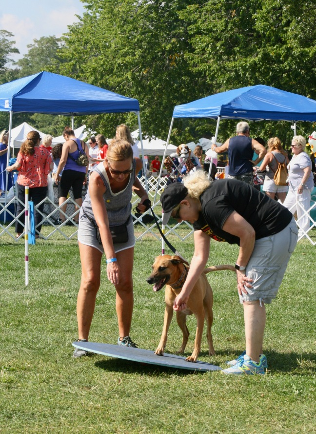 Owner and dog get a helping hand on the agility course.